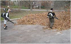 blowing leaves on the Toronto streets