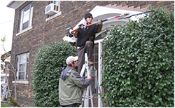 shrub pruning services, Toronto, ON