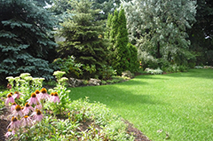 A well maintained garden with proper landscaping, trees and shrubs