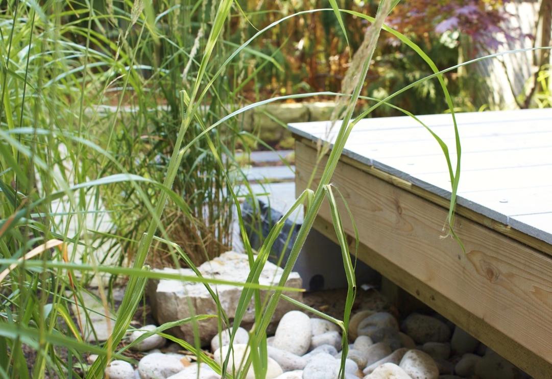 11 lambert grass close up