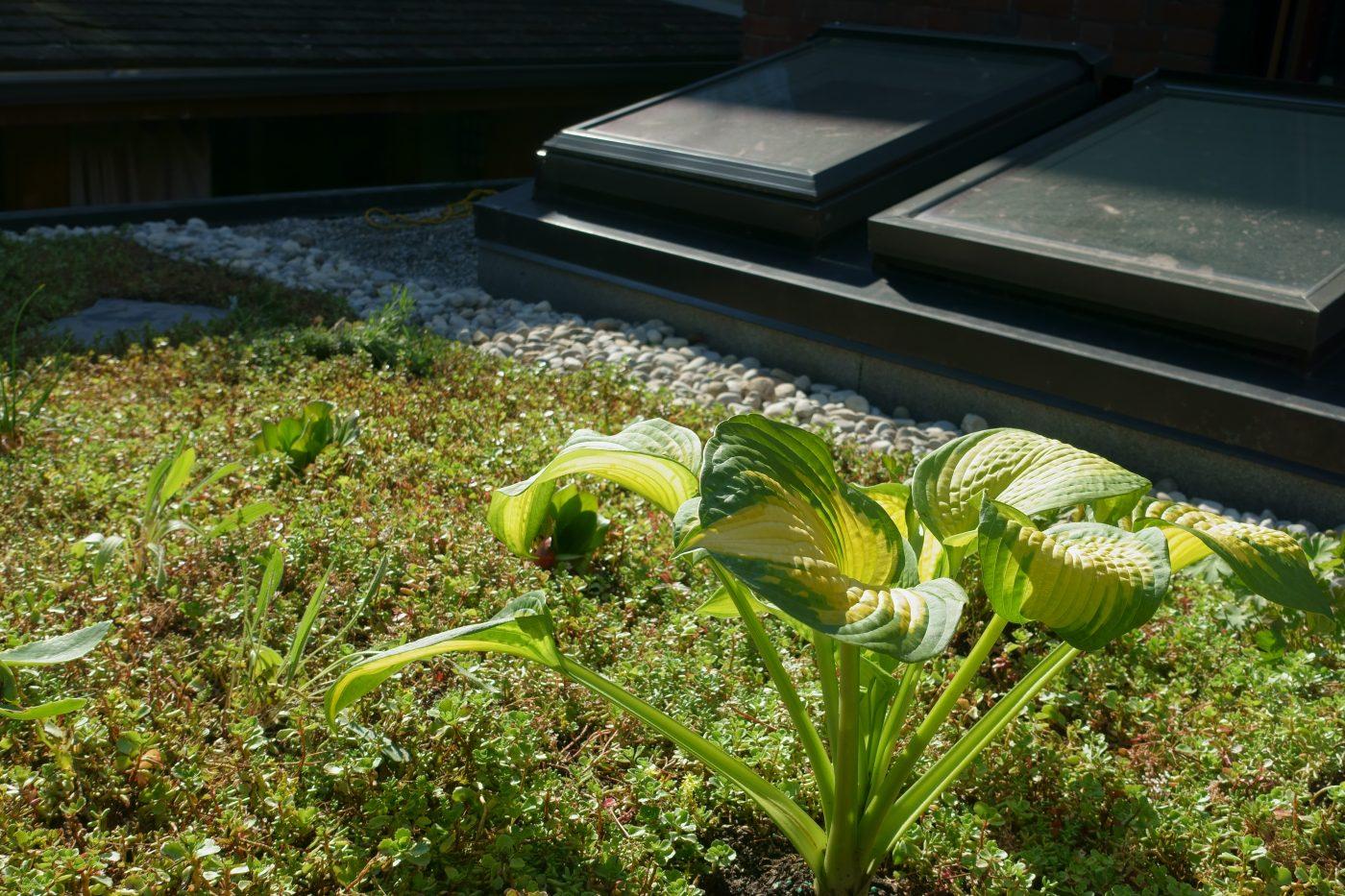 Green roof 14 Albermarle