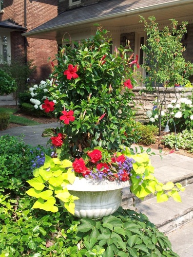 planting containers - summer urn picture